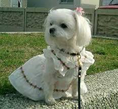 Photo of حکم نگهداری سگ در خانه